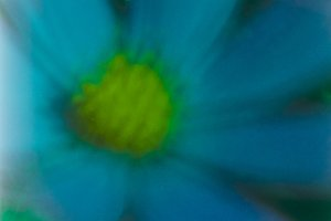 Blue cosmea abstract
