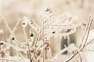 Winter background branches in ice