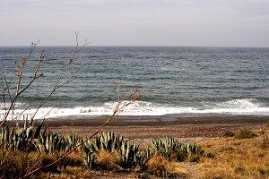 agave and beach
