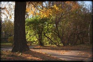 Last autumn sunny days | 120 film