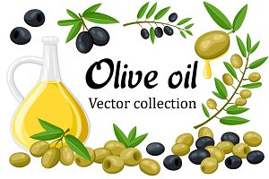 Olive oil vector set.