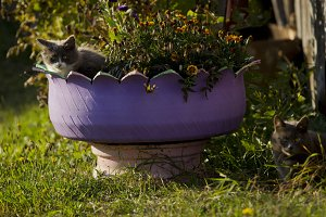 Cats in the flowerbed