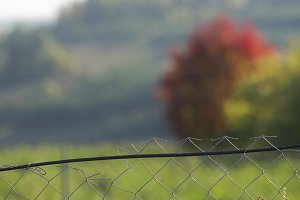 Wire netting in the field