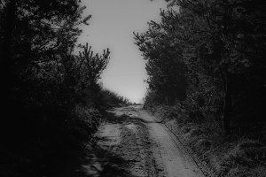Forest Road (Black & White)