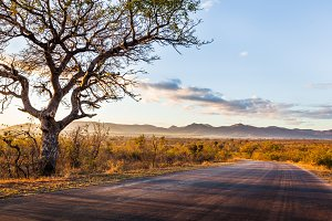 African Lanscape