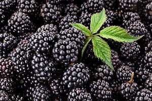 Fresh ripe blackberries with leaf.