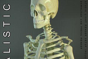 Realistic Skeleton