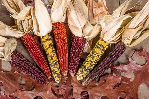 Fall indian corn with leaves