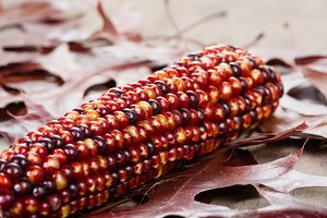 Indian corn colorful for decoration