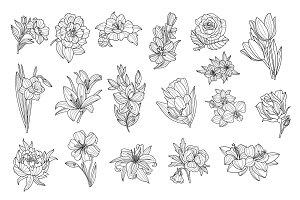 Flower Set. Hand Drawn