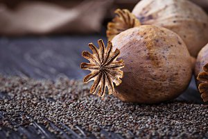 Poppy seeds and heads