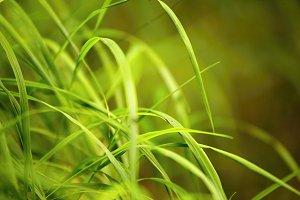 Green Grass #3