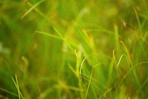 Green Grass #2