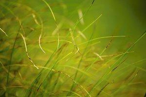 Green Grass #1