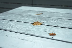 Autumn leaf on white wooden table