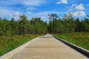 Viru Raba in Estonia, the nature