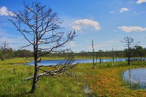 The nature of Estonia