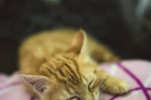 Ginger kitten sleeping