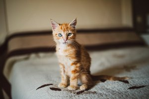 Orange tabby kitten over a bed