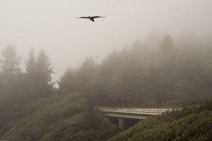 fog dipped trees