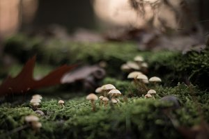 Little mushrooms