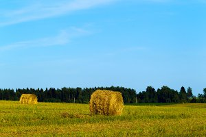 Summer rural landscape with a mown grass and hay rolls