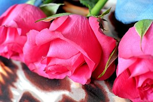 Three pink roses on a scarf