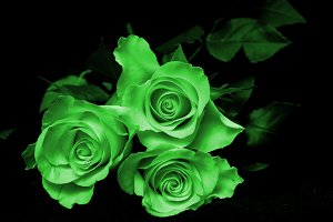 Three green roses