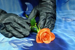Pink rose with black gloves