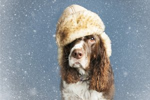 Snowy Dog wearing a hat