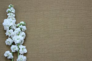 White flowers on Burlap-1