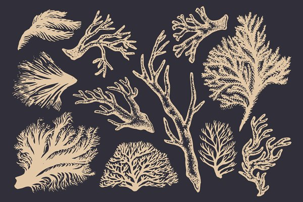 Coral & Seaweed Drawings & Patterns
