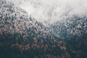 Foggy Autumn Coniferous Forest