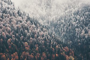 Foggy Coniferous Forest and lake