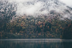 Coniferous Forest and lake wild