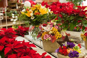 Flower shop at Christmas
