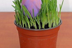 Purple Easter egg