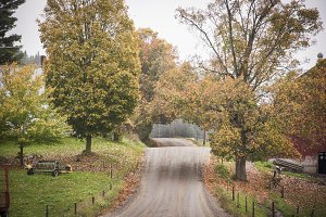 Fall Tree Covered Road