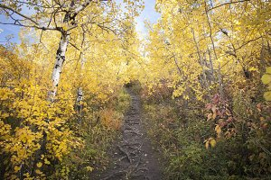 Yellow Fall Path to Blue Sky