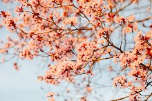 Branch full of flowers
