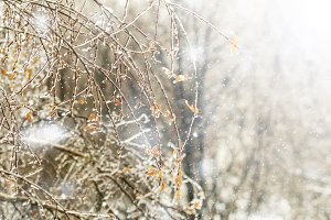 icy tree branches