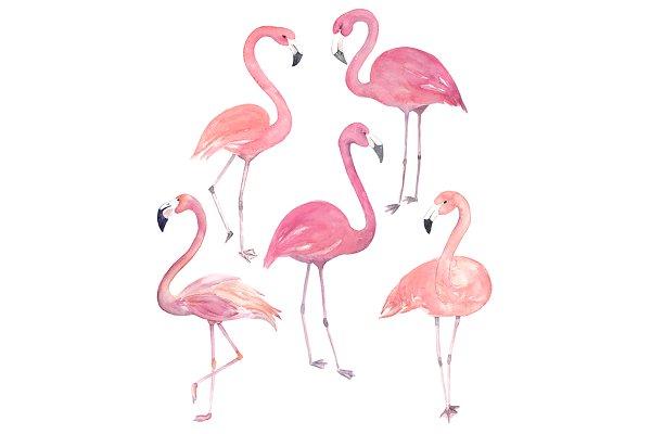 Watercolor Flamingo Set