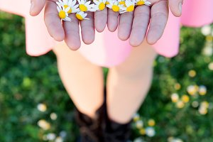 Beautiful daisy in the hands