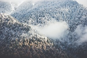 Winter Forest Landscape aerial view