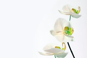 orchid bouquet on white