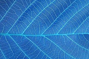 blue leaf macro background