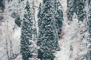 Winter Forest and Lake Landscape