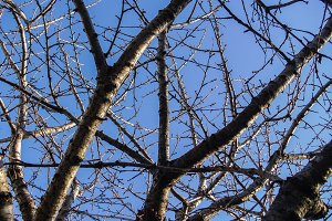 Branches blue sky background
