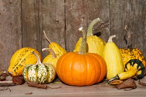 Autumn pumpkins still life