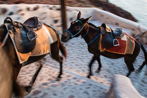 Mules in Motion